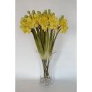 Lill Orhidee YELLOW