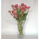 Lill Ranunculus ROSE