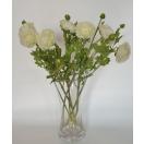 Lill Ranunculus WHITE