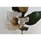 Lill Magnolia WHITE